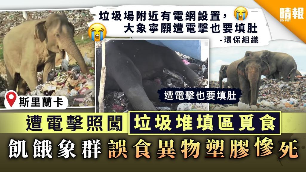 【救救動物】遭電擊照闖垃圾堆填區覓食 飢餓象群誤食異物塑膠慘死
