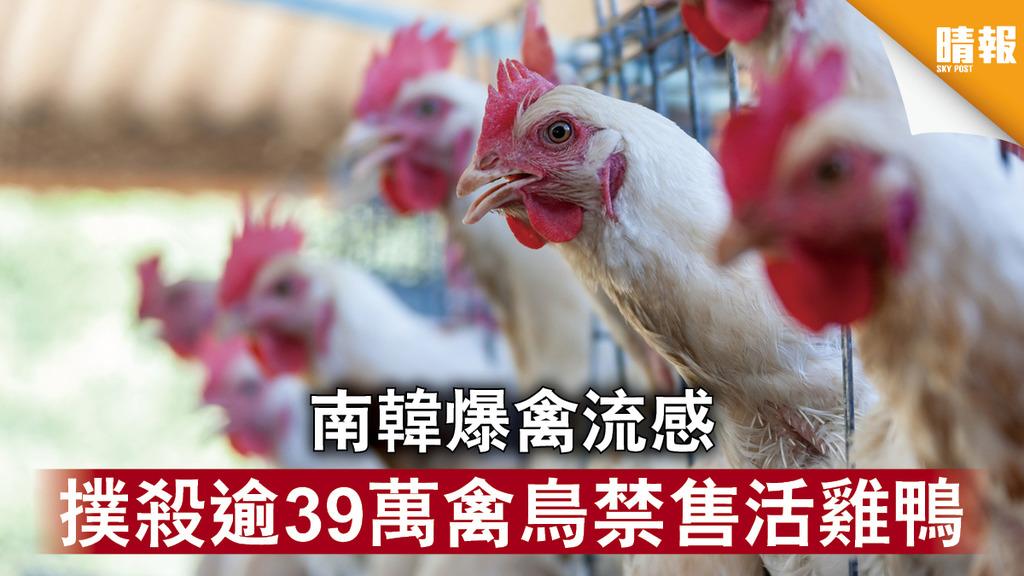 【南韓疫情】南韓爆禽流感 撲殺逾39萬禽鳥禁售活雞鴨