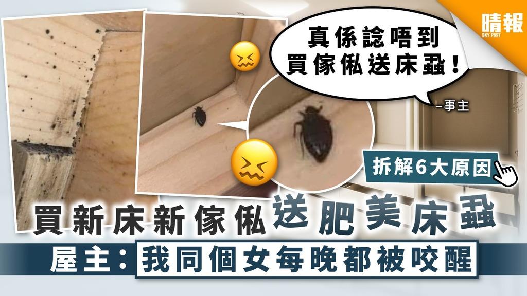 【木蝨床蝨】買新床新傢俬送肥美床蝨 屋主:我同個女每晚都被咬醒【附專家意見】