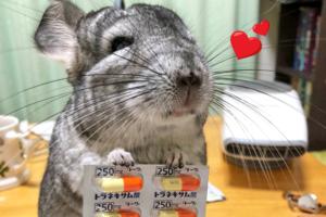 【龍貓寵物】日本可愛小龍貓為生病主人遞上藥丸 默默守候主人超體貼好有愛!
