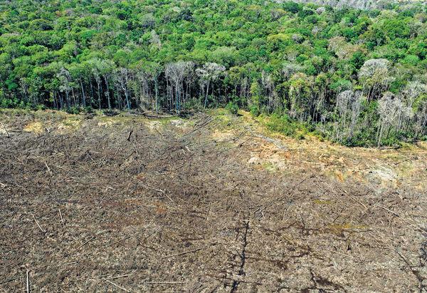 亞馬遜雨林砍伐 12年來最嚴重