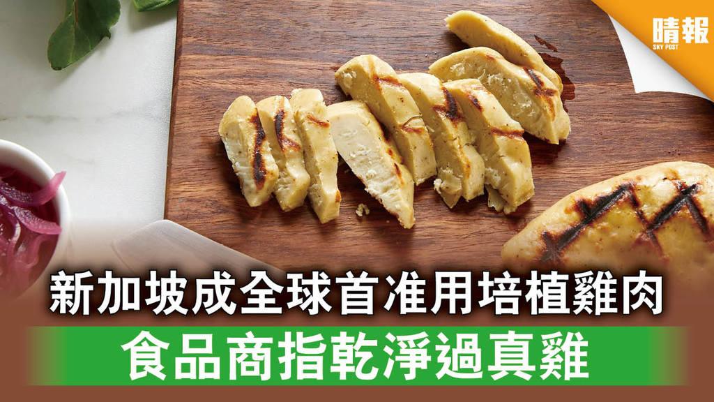 未來食物│新加坡成全球首准用培植雞肉 食品商指乾淨過真雞