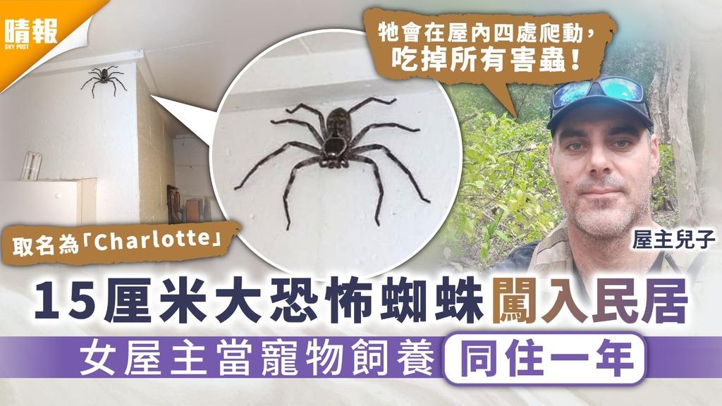 另類寵物 15厘米大恐怖蜘蛛闖入民居 女屋主當寵物飼養同住一年