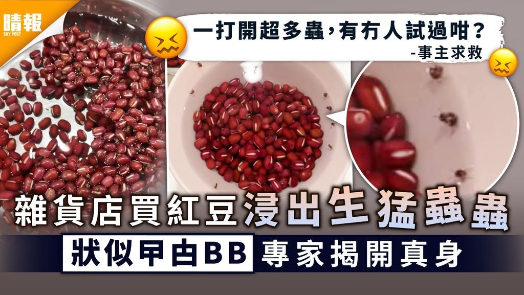 食用安全│雜貨店買紅豆浸出生猛蟲蟲 狀似曱甴BB專家揭開真身