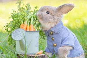 【兔仔寵物】童話故事走出來的彼得兔! 日本可愛兔仔食蘿蔔似足可愛毛公仔