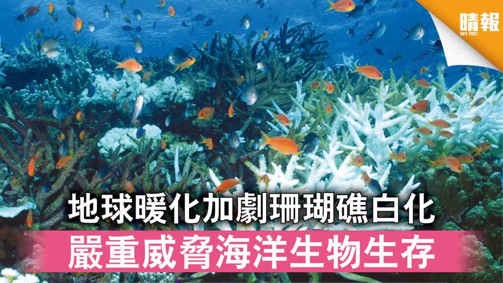 全球暖化|地球暖化加劇珊瑚礁白化 嚴重威脅海洋生物生存