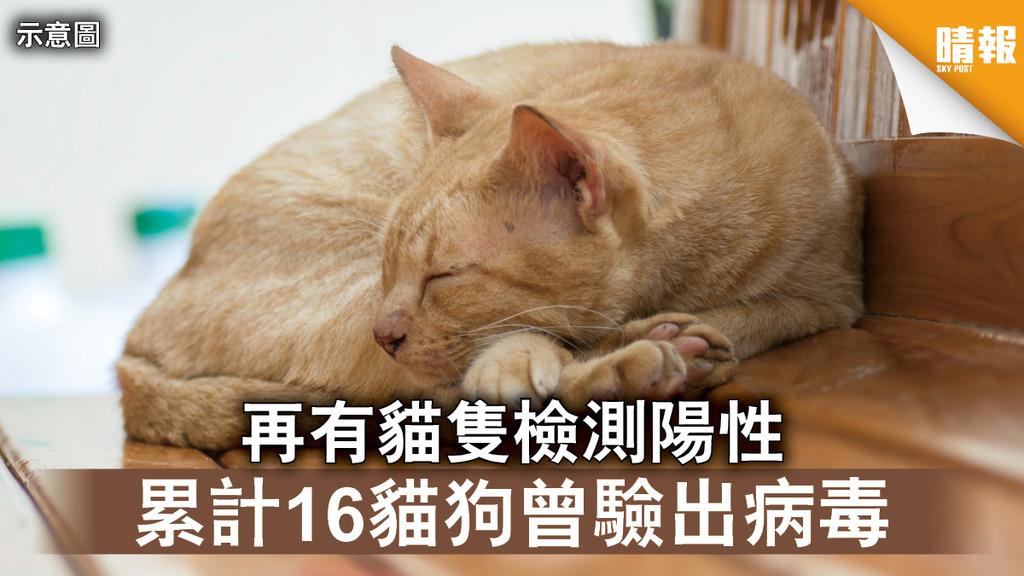 新冠肺炎|再有貓隻檢測陽性 累計16貓狗曾驗出病毒