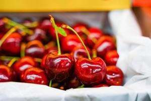 【車厘子】2021澳洲塔斯曼尼亞車厘子開始當造 水果達人教3招揀靚車厘子/品種/價錢/保存方法