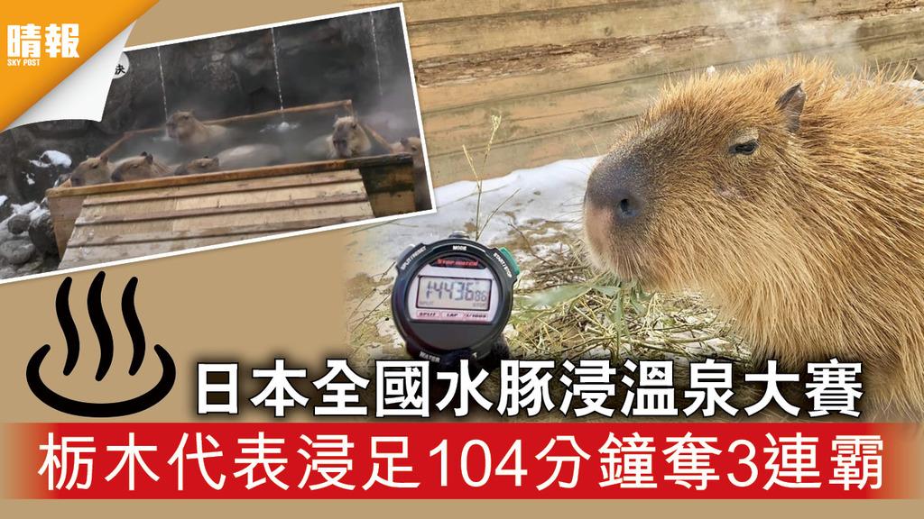 日韓記事 日本全國水豚浸溫泉大賽 栃木代表浸足104分鐘奪3連霸