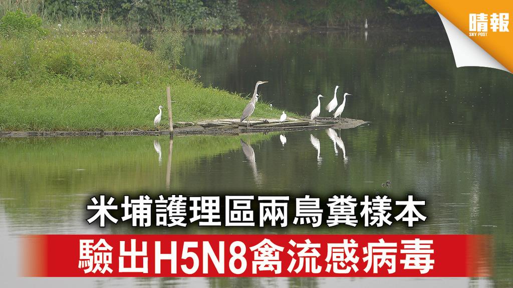 禽流感|米埔護理區兩鳥糞樣本 驗出H5N8禽流感病毒