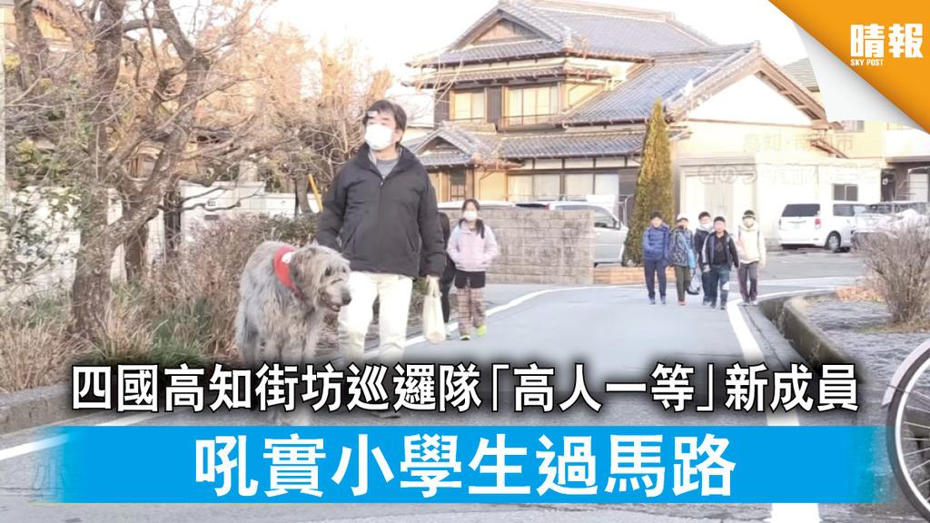 日韓記事 四國高知街坊巡邏隊「高人一等」新成員 吼實小學生過馬路