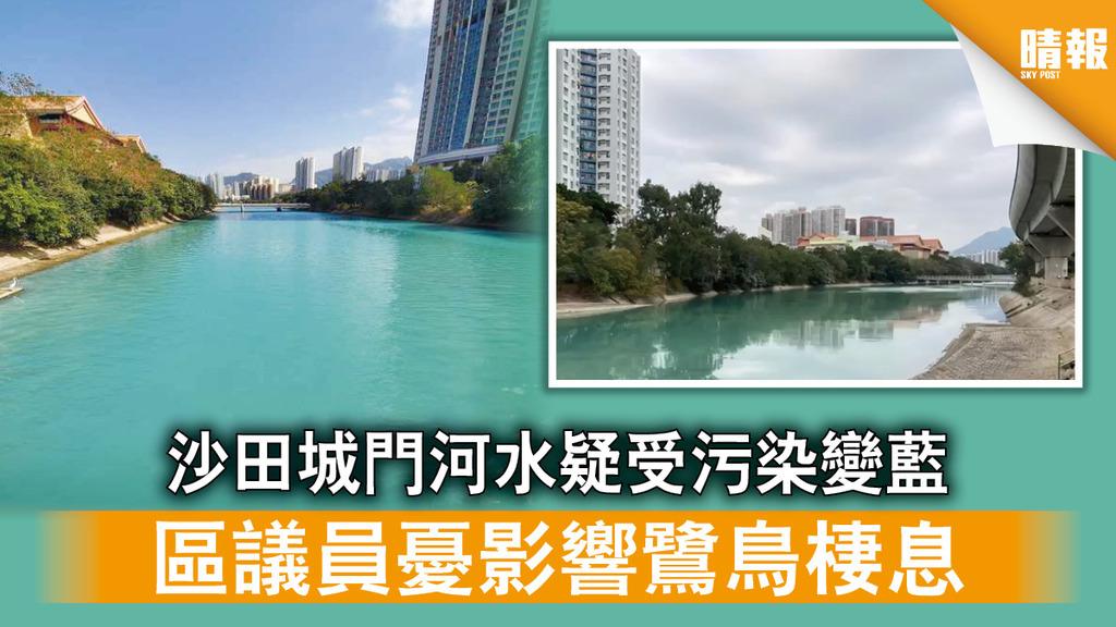 水質污染|沙田城門河水疑受污染變藍 區議員憂影響鷺鳥棲息