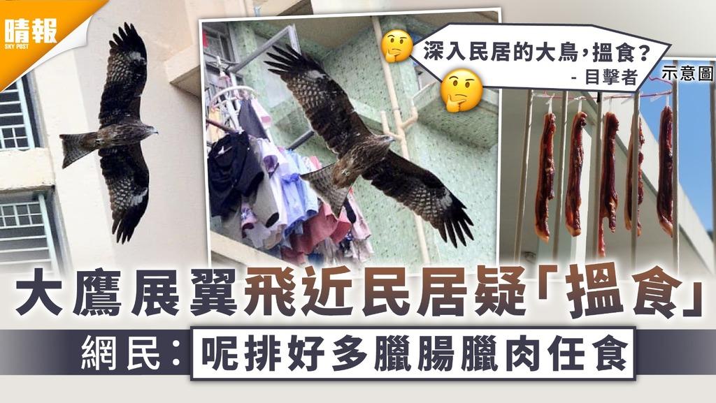 環境衛生 大鷹展翼飛近民居疑「搵食」 網民:呢排好多臘腸臘肉任食