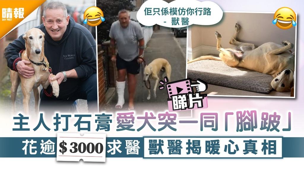 老友狗狗|主人打石膏愛犬突一同「腳跛」 花逾$3000求醫獸醫揭狗狗暖心真相
