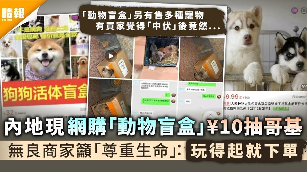 生命何價│內地現網購「動物盲盒」¥10抽哥基 無良商家籲「尊重生命」:玩得起就下單