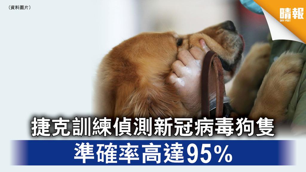 新冠肺炎|捷克訓練偵測新冠病毒狗隻 準確率高達95%