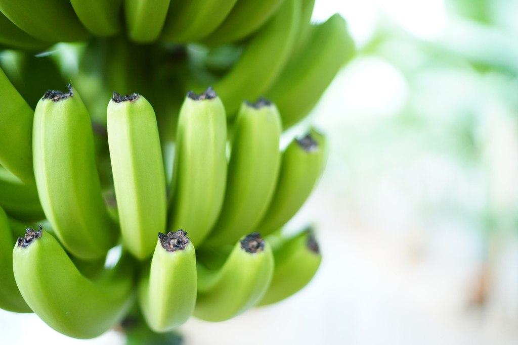 日韓記事│ 北海道釧路有機蕉946 Banana 既香且甜 皮薄到可以食