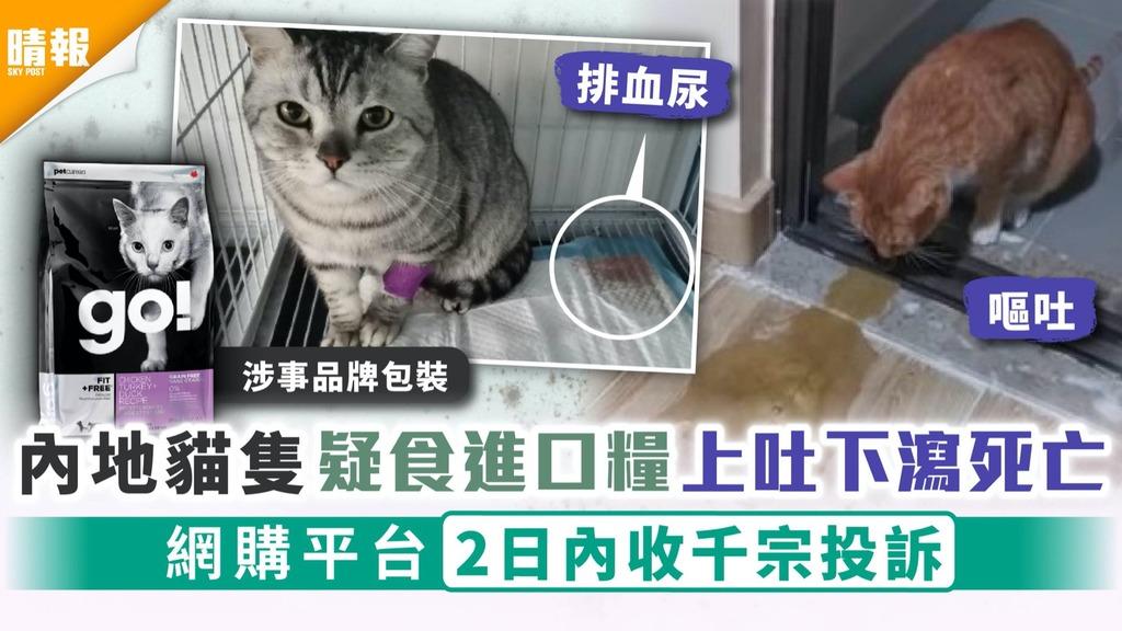 食貓糧中毒|內地貓隻疑食進口糧上吐下瀉死亡 網購平台2日內收千宗投訴
