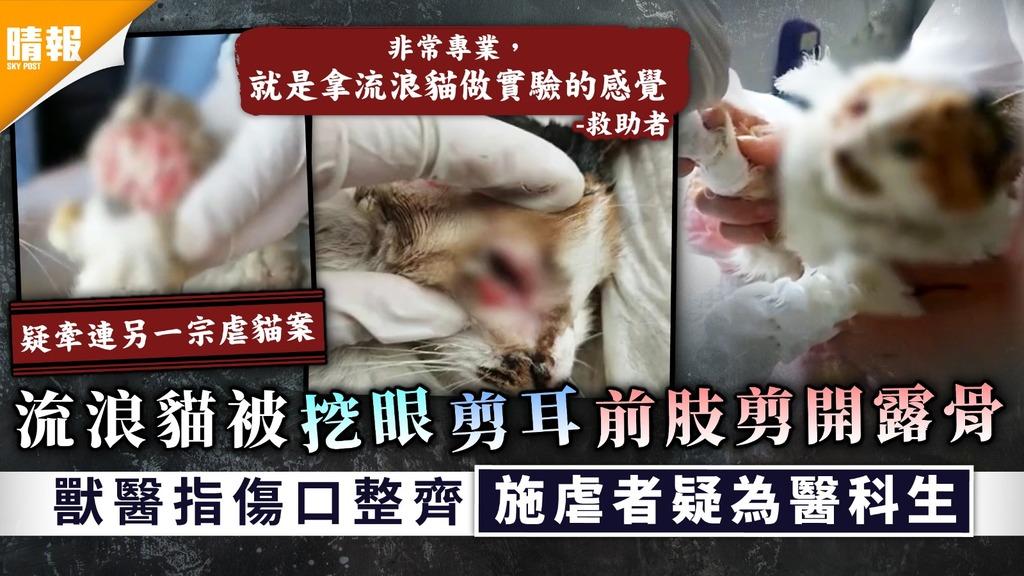 冷血殘忍|流浪貓被挖眼剪耳前肢剪開露骨 獸醫指傷口整齊施虐者疑為醫科生