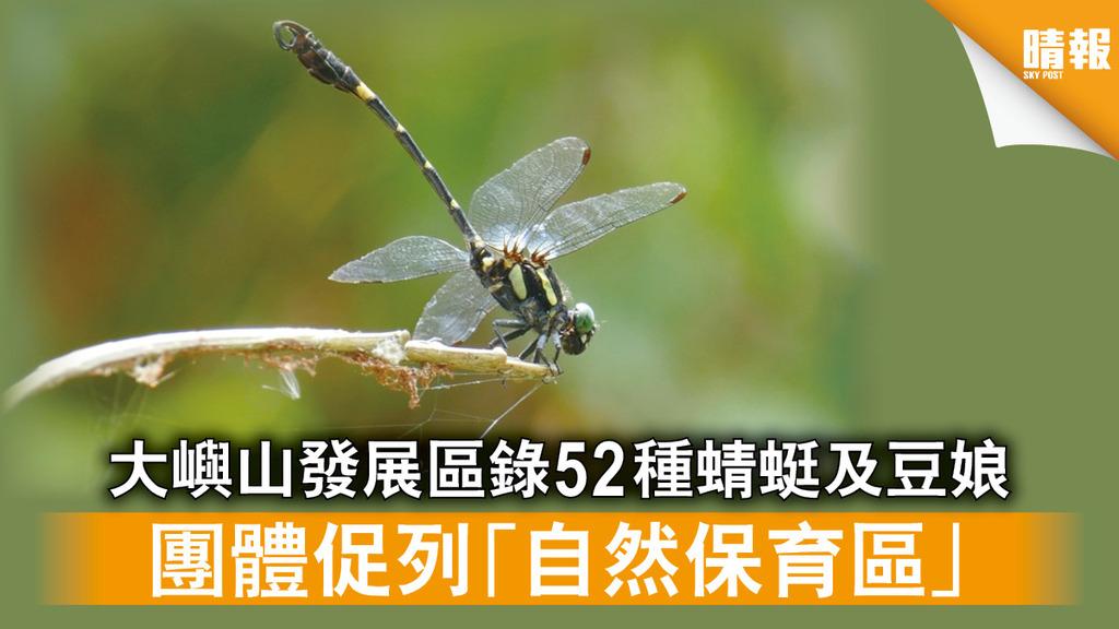 自然生態|大嶼山發展區錄52種蜻蜓及豆娘 團體促列「自然保育區」(多圖)