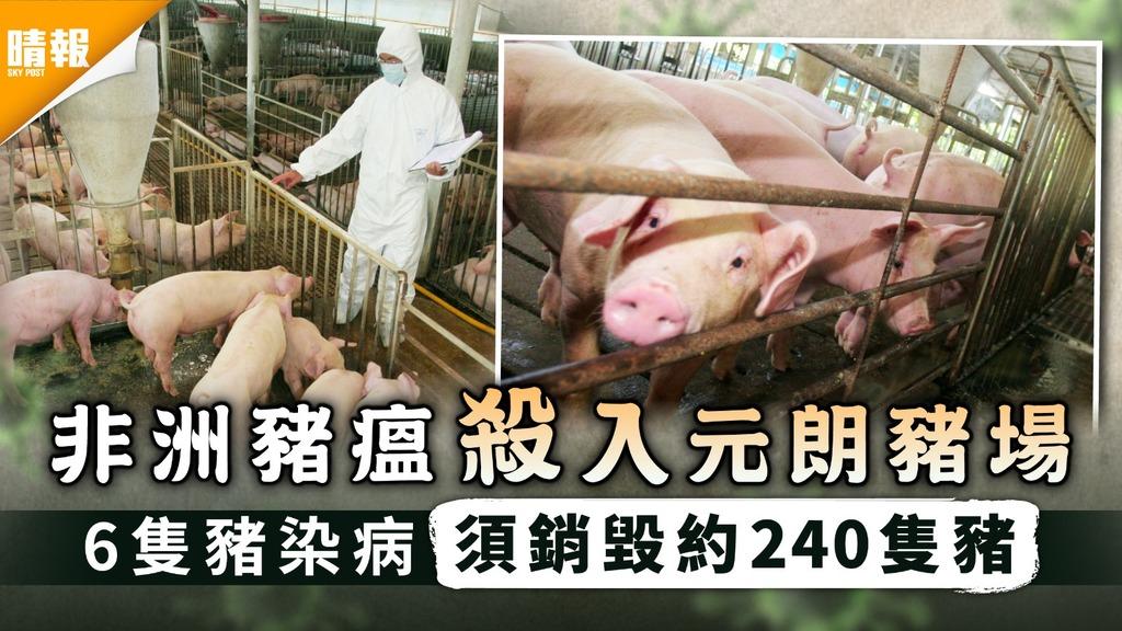 禽畜播毒 本地豬場爆非洲豬瘟 內地3人染H5N6禽流感