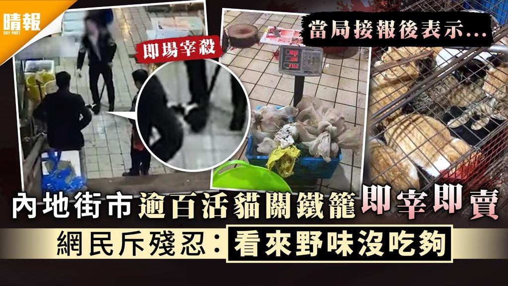令人髮指|內地街市逾百活貓關鐵籠即宰即賣 網民斥殘忍:看來野味沒吃夠