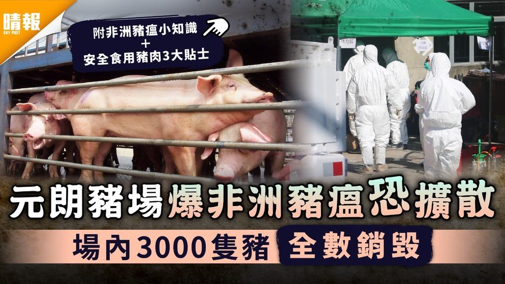 食用安全 元朗豬場爆非洲豬瘟恐擴散 場內3000隻豬全數銷毀  附食用豬肉3大貼士