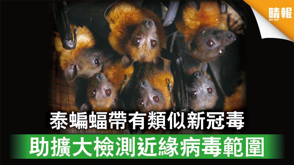 新冠肺炎 泰蝙蝠帶有類似新冠毒 助擴大檢測近緣病毒範圍