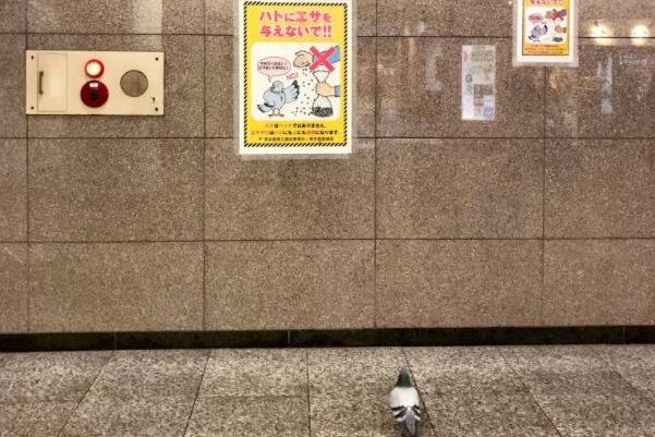 日本東京貼上不要餵鴿子告示  途人發現真身落寞的背景