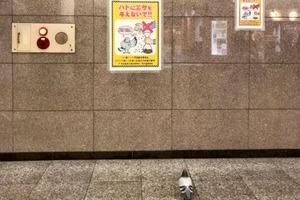 日本東京貼上不要餵鴿子告示  途人發現真身落寞的背影