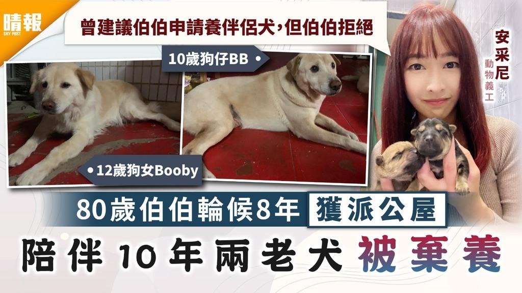 領養狗狗│80歲伯伯輪候8年獲派公屋 陪伴10年兩老犬被棄養