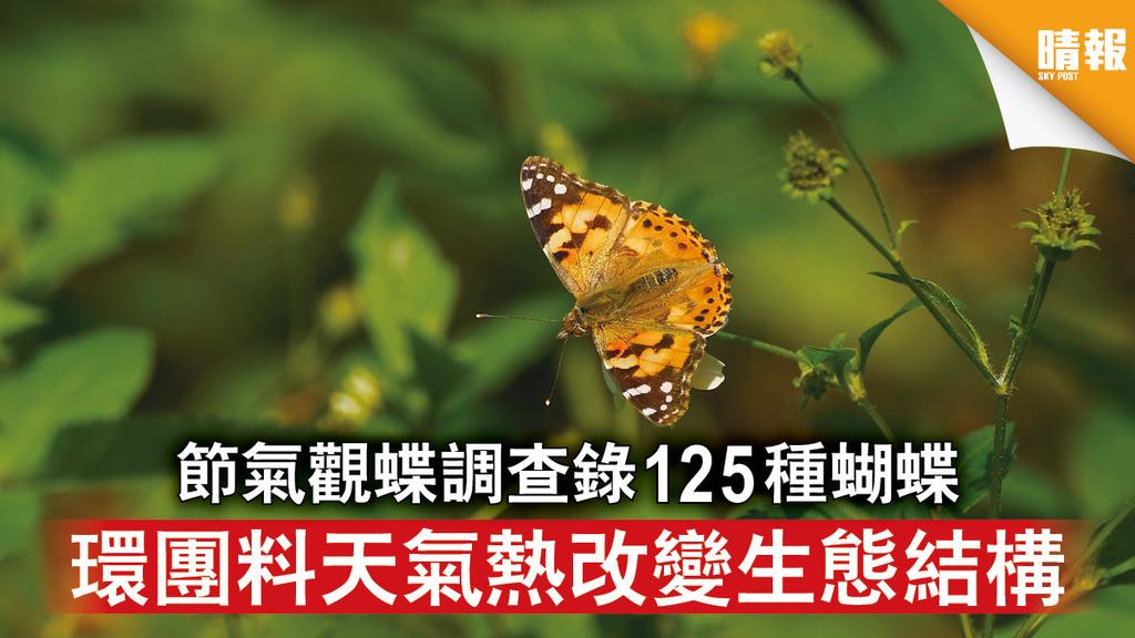 自然生態 節氣觀蝶調查錄125種蝴蝶 環團料天氣熱改變生態結構(多圖)