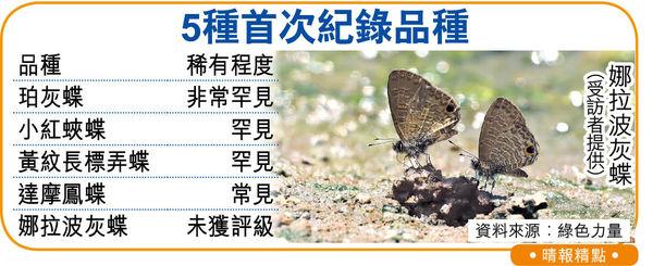 天氣愈熱蝴蝶愈多 去年港錄125種 5品種首現蹤影
