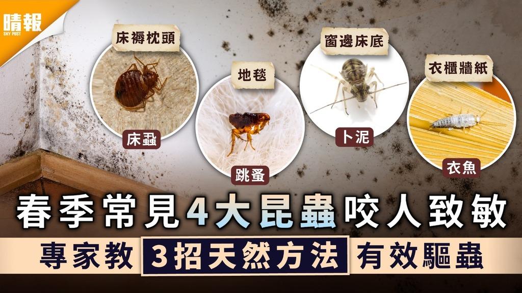 潮濕回南天|春季常見4大昆蟲咬人致敏 專家教3招天然方法有效驅蟲