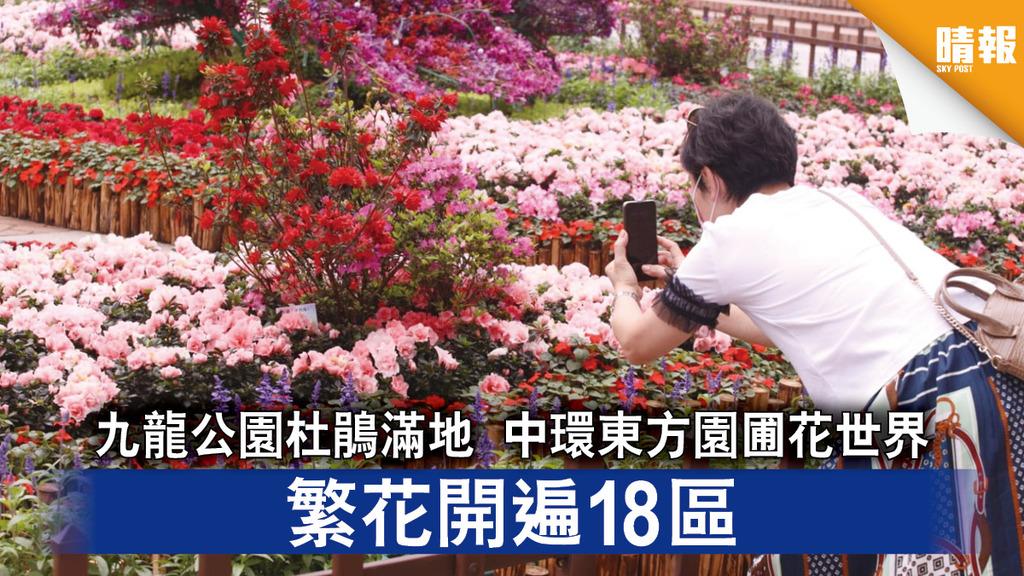 花展2021|九龍公園杜鵑滿地 中環東方園圃花世界 繁花開遍18區(多圖)