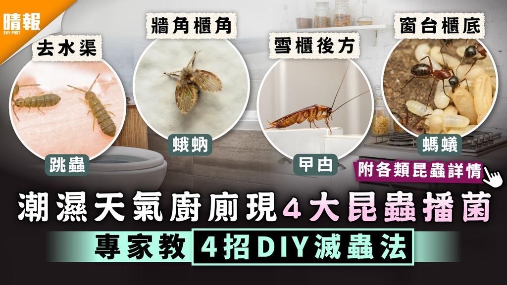 回南天|潮濕天氣廚廁現4大昆蟲播菌 專家教4招DIY滅蟲法【附各類昆蟲詳情】