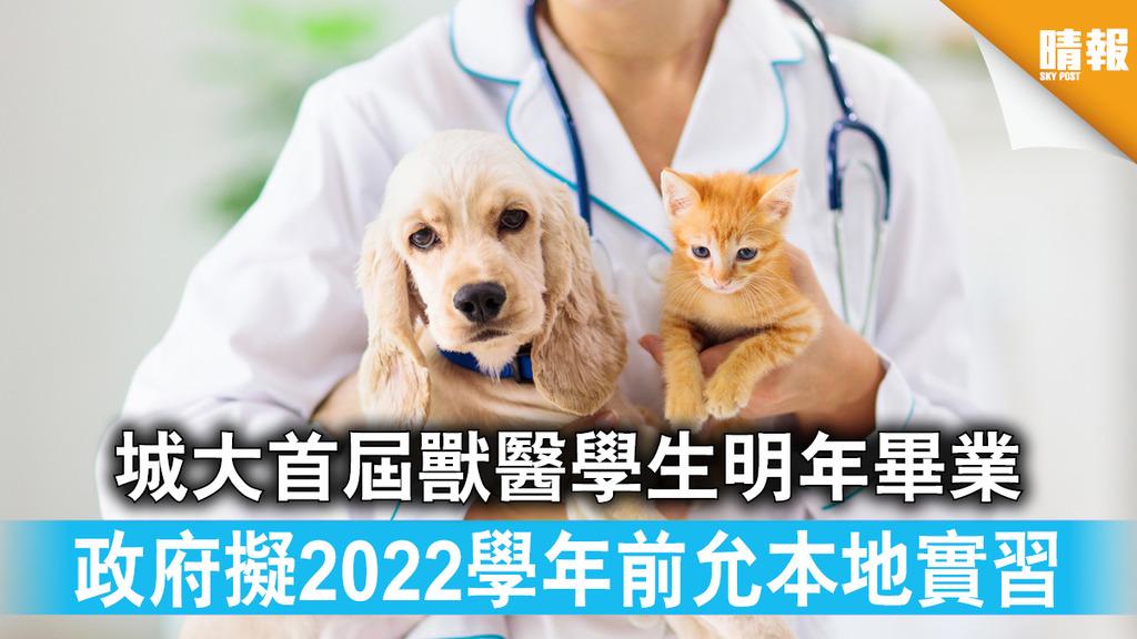 本地獸醫|城大首屆獸醫學生明年畢業政府擬2022學年前允本地實習