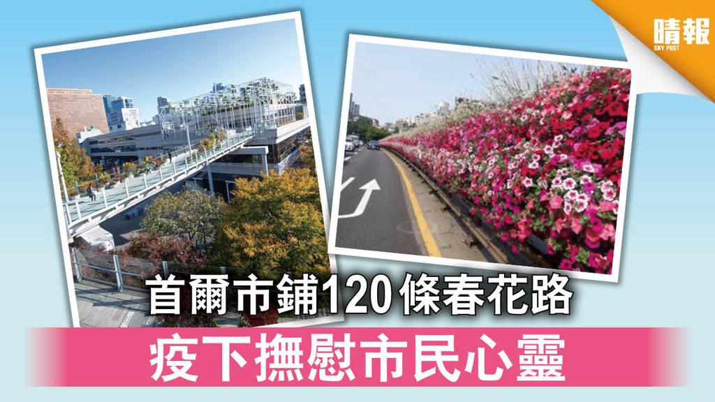 日韓記事|首爾市鋪120條春花路 疫下撫慰市民心靈