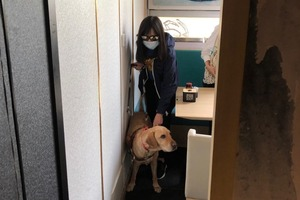 【導盲犬】視障人士與導盲犬慘被趕出餐廳   法例保障導盲犬可自由進出公眾場所/交通工具