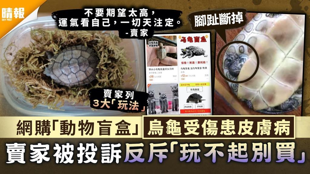 生命何價|網購「動物盲盒」烏龜受傷患皮膚病 賣家被投訴反斥「玩不起別買」