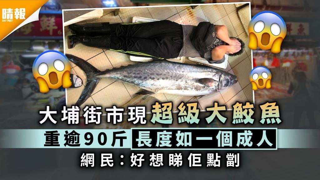 大翼鮫|大埔街市現超級大鮫魚重逾90斤 網民:好想睇佢點劏