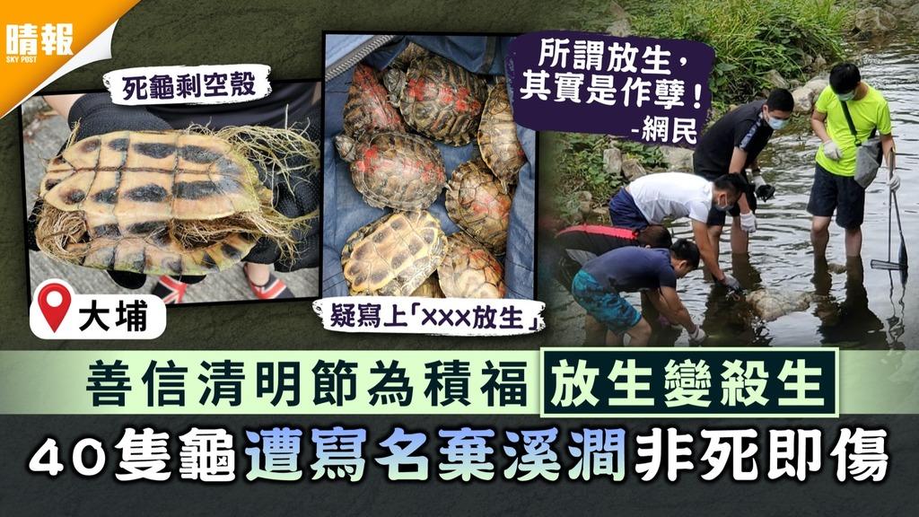 積福變作孽|善信清明節為積福放生變殺生 40隻龜遭寫名棄溪澗非死即傷