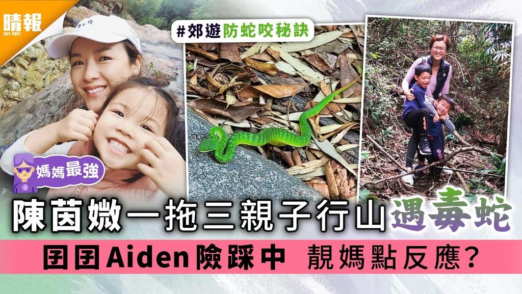 媽媽最強︳陳茵媺一拖三親子行山遇毒蛇 囝囝Aiden險踩中 靚媽點反應?