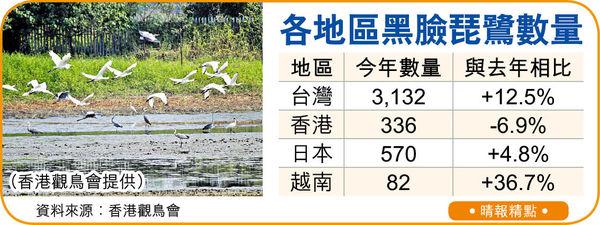 瀕危黑臉琵鷺全球數量增 本港反跌
