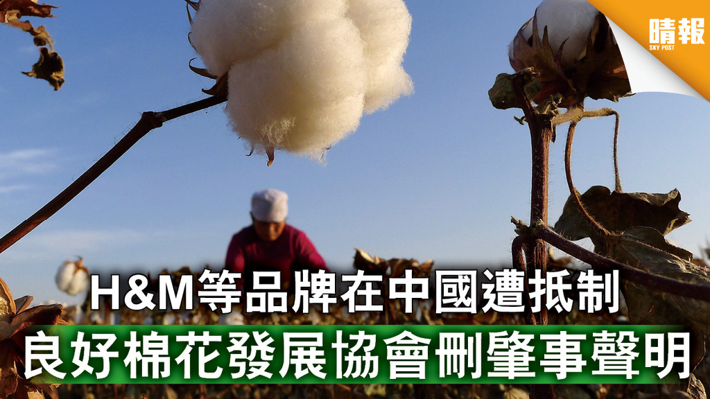 新疆棉|H&M等品牌在中國遭抵制 良好棉花發展協會刪肇事聲明