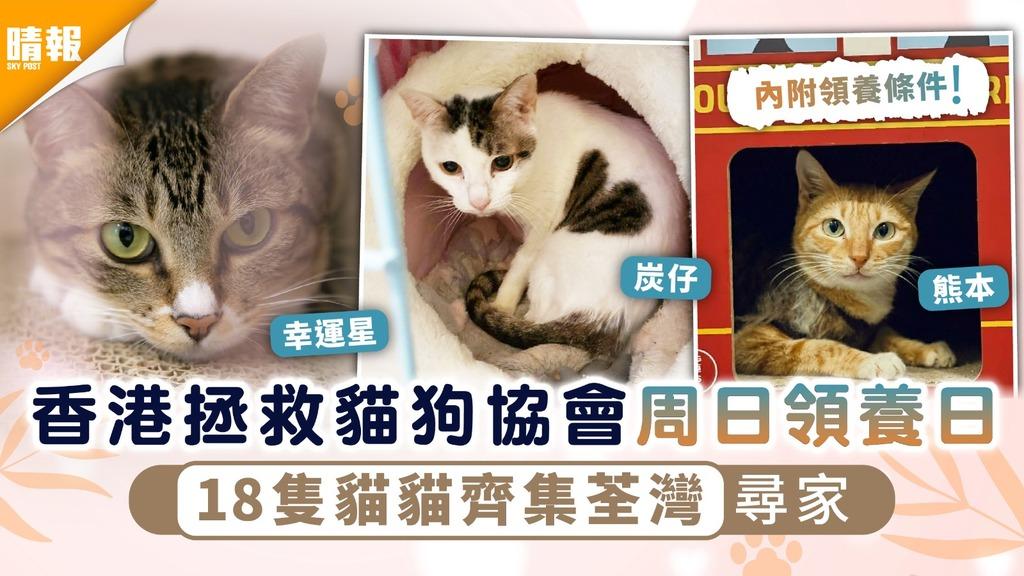 周日好去處|香港拯救貓狗協會周日領養日 18隻貓貓齊集荃灣尋家