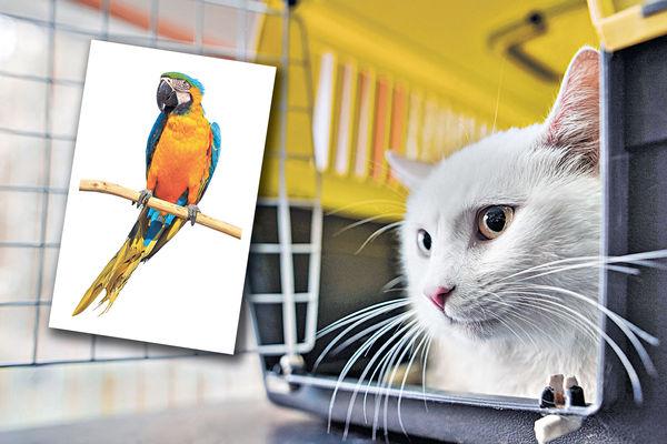 寵物移民潮 主人豪花25萬攜鸚鵡出走 官方發健康證明多3成 赴英佔10%