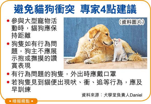 寵物節樂極生悲 柴犬涉咬死貓B 貓主報警追究 狗主致歉否認不顧而去