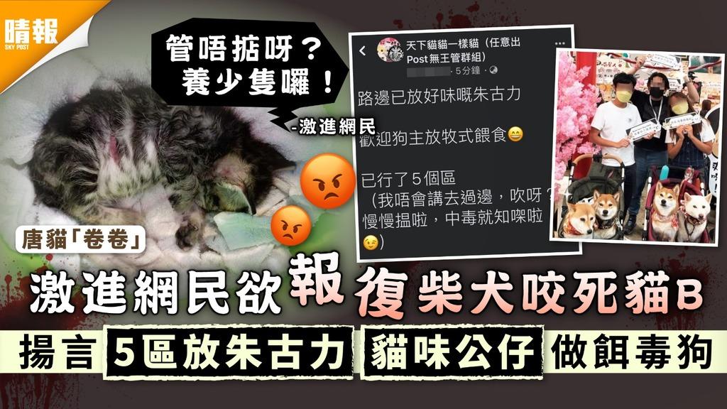 寵物節2021|激進網民欲報復柴犬咬死貓B 揚言5區放朱古力貓味公仔做餌毒狗