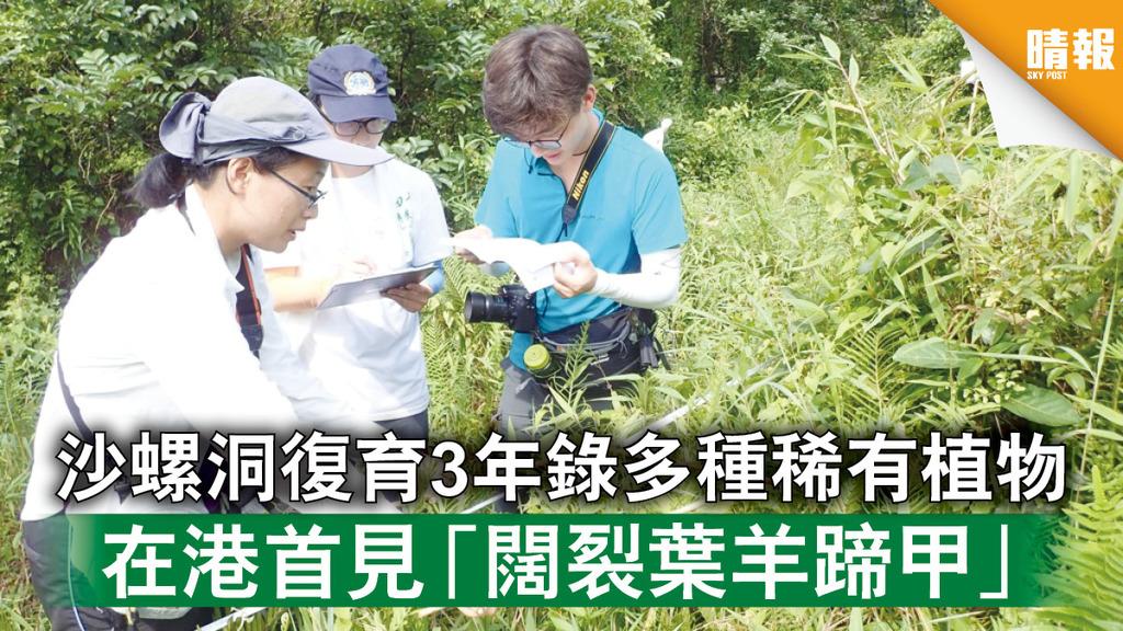 自然生態|沙螺洞保育3年錄多種稀有植物 在港首見「闊裂葉羊蹄甲」 (多圖)